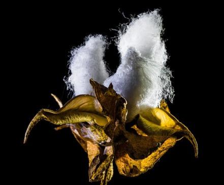 matratzenbezug-baumwolle